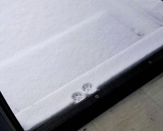 two tiny paw prints in the fresh light snow