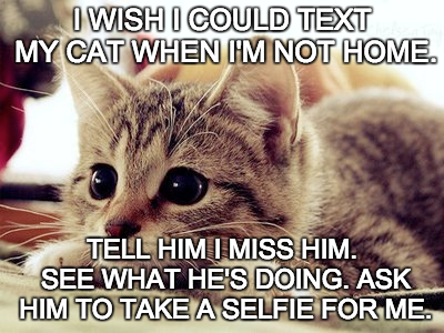 i wish i could text my cat when i'm not home, tell him i miss him, see what he's doing, ask him to take a selfie for me, meme
