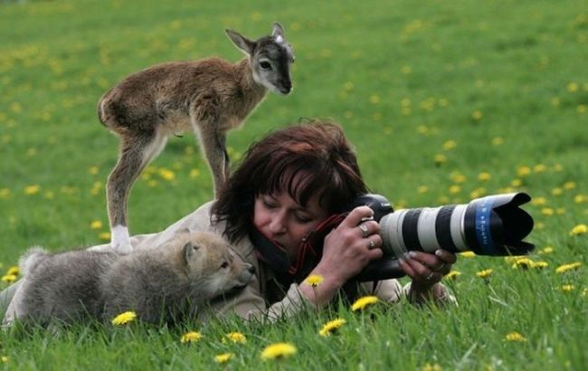 when the subject of your photographs just want to know what's going on, baby deer and wolf on woman photographer