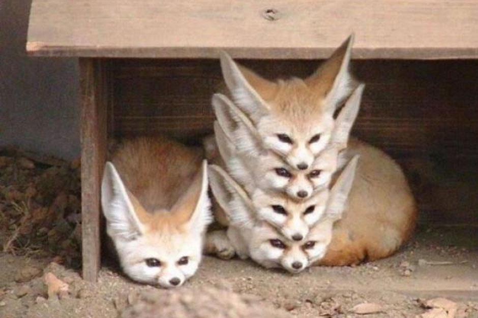 a fox stack looks like an alien