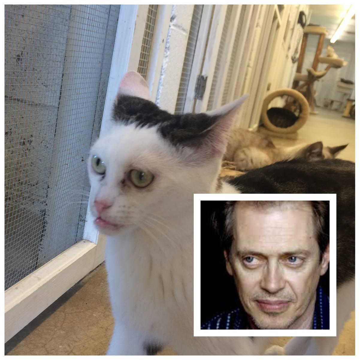 cat that looks like steve buschemi