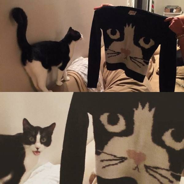 cat recognizes itself on shirt and is happy