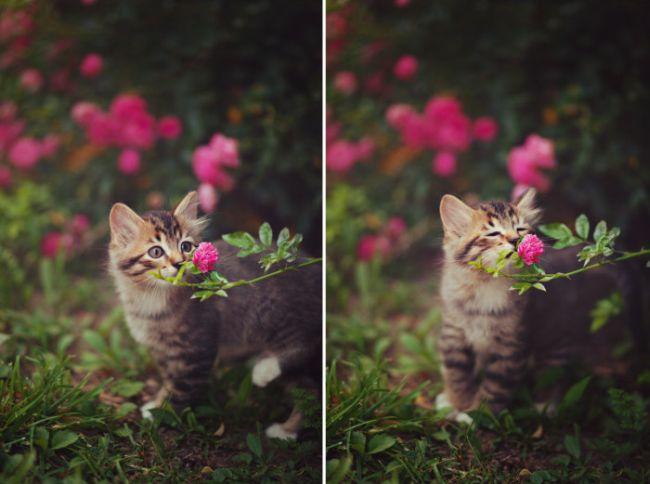 kitten smelling a pretty flower
