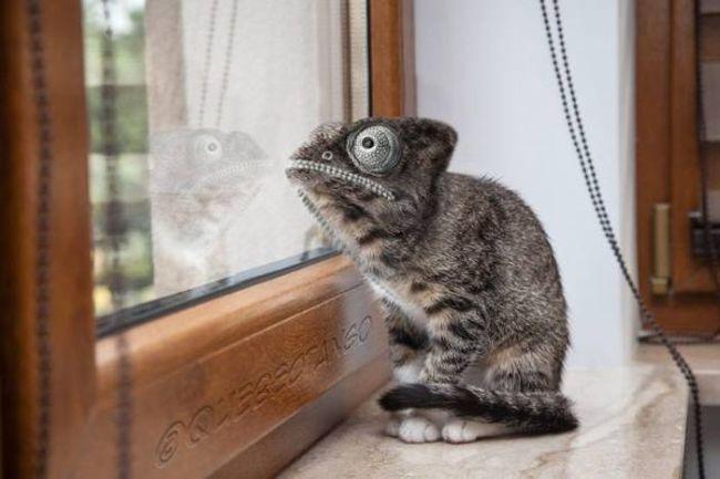 lizard kitten hybrid
