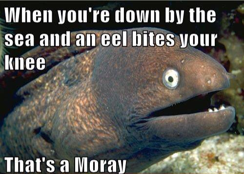 when you're down by the sea and an eel bites your knee, that's a moray, bad joke eel, meme