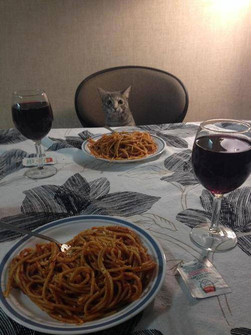 when you're celebrating valentine's day with your significant other, who is a cat