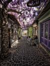 cozy flower shade street