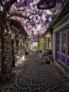 cozy flower shade street