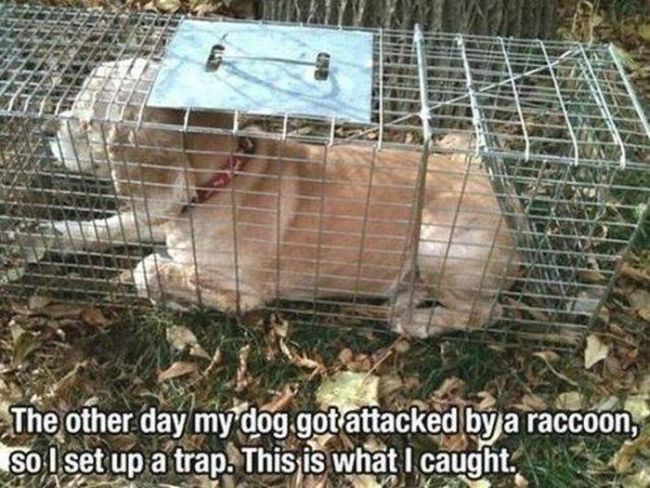 the other day my dog got attacked by a raccoon so i set up a trap, this is what i caught