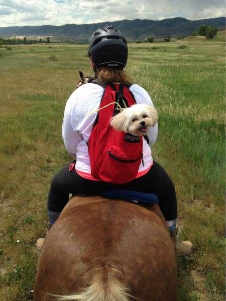 backpack dog on horse back