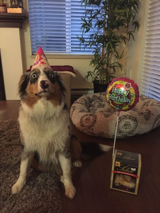 excited or scared dog for his birthday