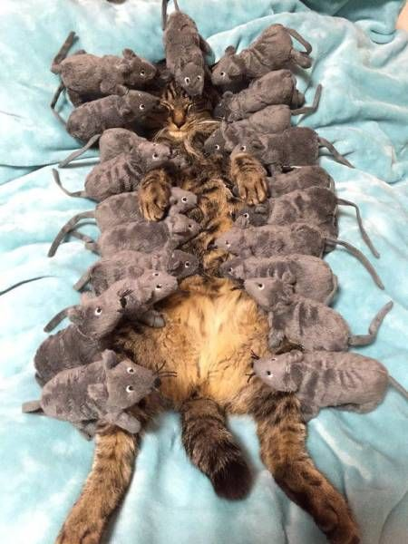 sleeping cat covered in stuffed rats