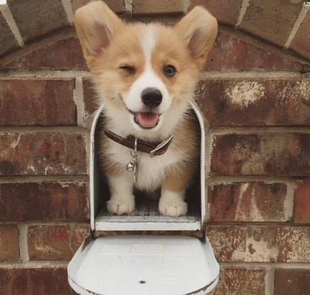 cute puppy winking