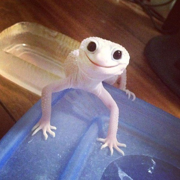Image result for images of happy lizard