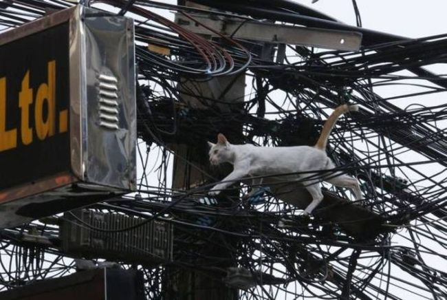 wet cat walking on power lines, wtf