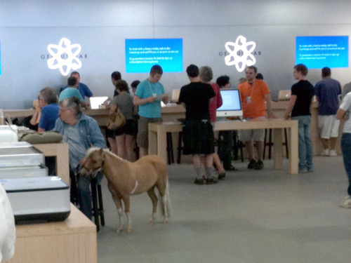 just a mini horse in an apple store