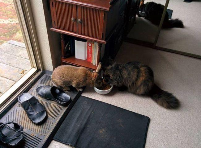rabbit sharing cat's food