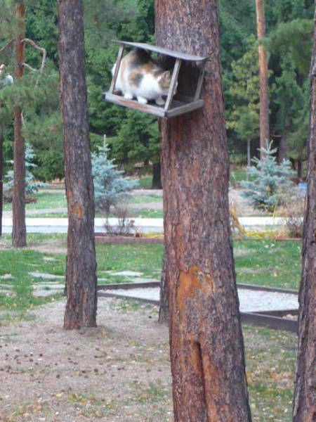 cat will box even if tree