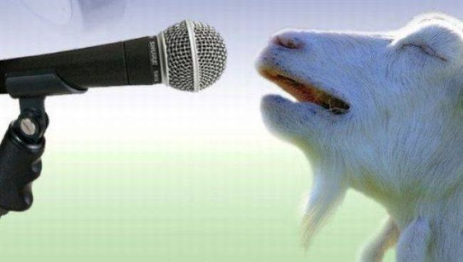 singing goat, microphone up to a goat's mouth