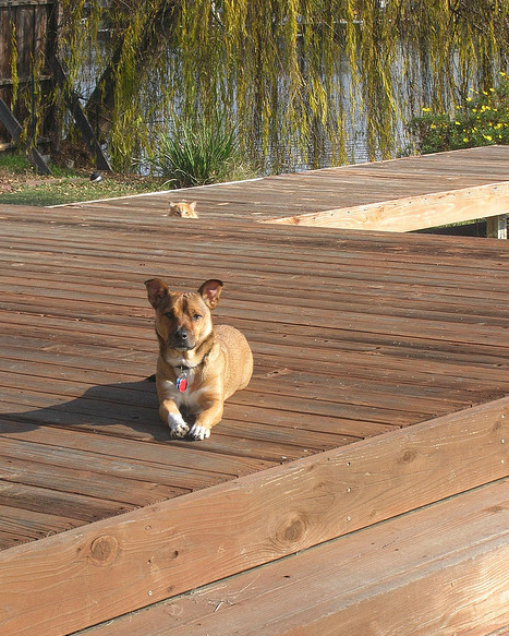cat photobombing dog on dock