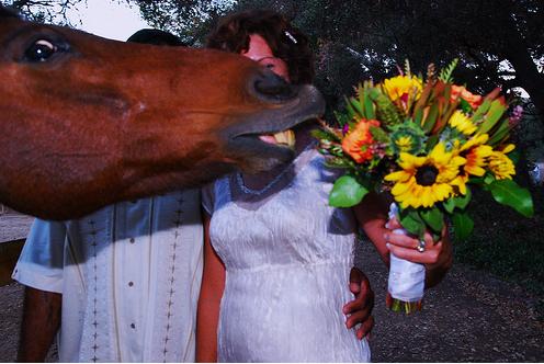 epic horse photobomb