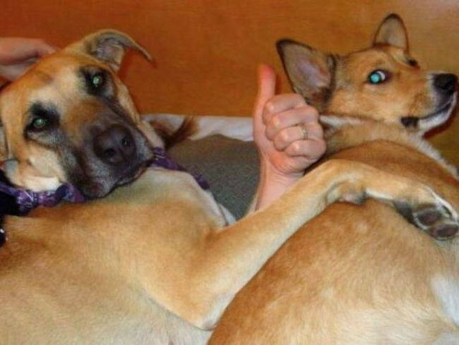 spooning dog gives thumbs up