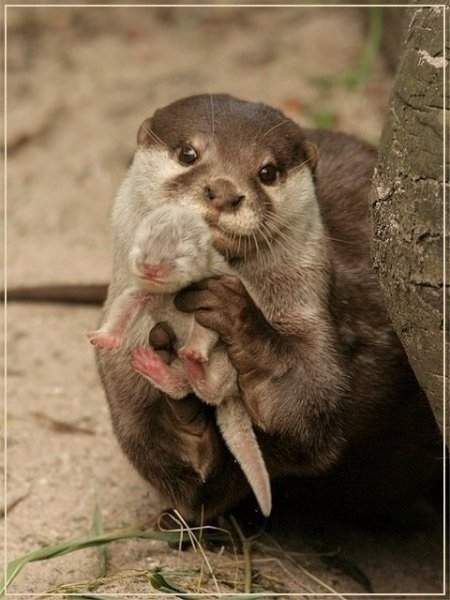 i made this, otter showing her baby