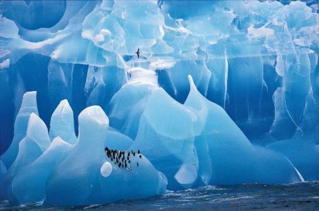 living in a wine wonder world, penguins on blue iceberg