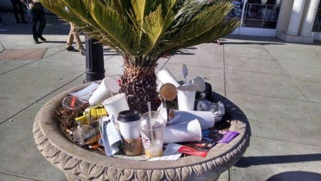 humans are disgusting, public plant pot used as garbage