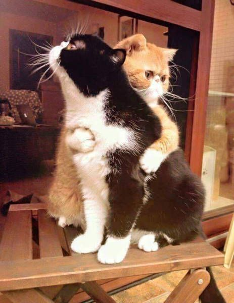 orange cat hugging another cat