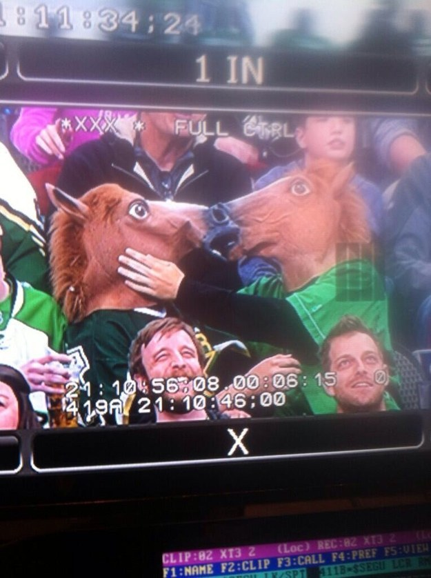 two horse faces kissing at the game