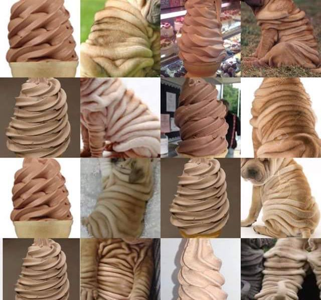 wrinkled pupper or ice cream, dog or food