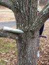 baseball bat through a tree