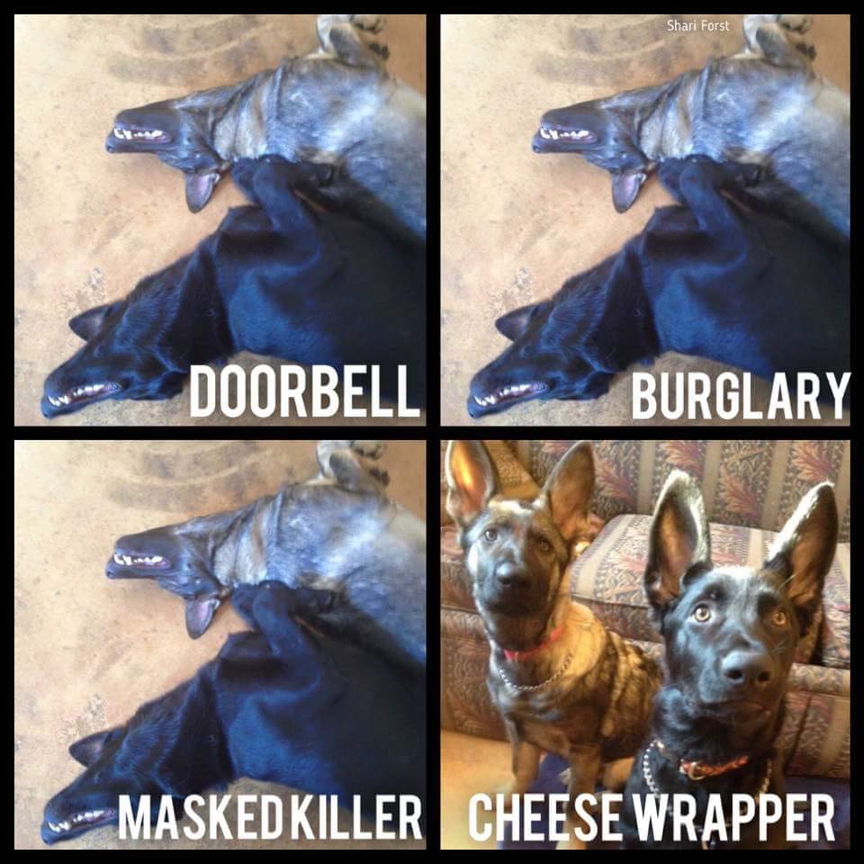 how dogs reacts to the doorbell, burglary, masked killer, cheese wrapper