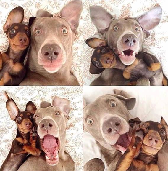 when best friends take a series of selfies, dogs