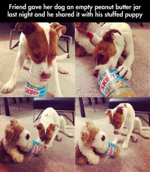 friend gave her dog an empty peanut butter jar last night and he shared it with his stuffed puppy