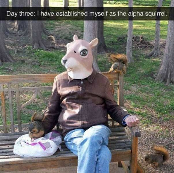 day three i have established myself as the alpha squirrel