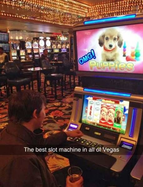 the best slot machine in all of vegas, omg puppies