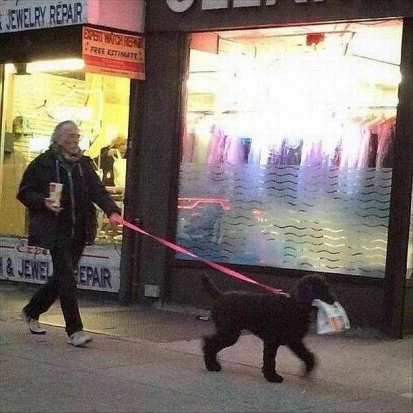 dog carrying mcdonald's food bag