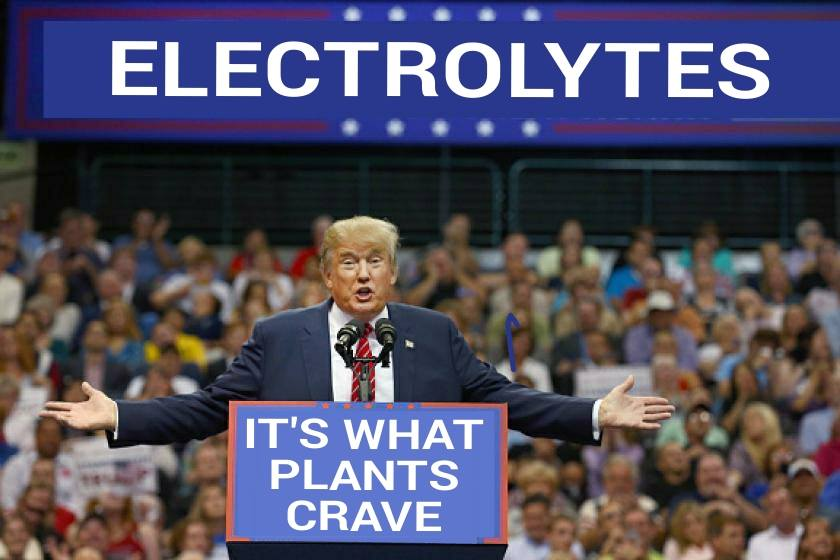 electrolytes, it's what plants crave, idiocracy, donald trump