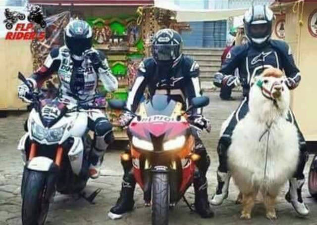 transportation method of choice, motorcycle versus llama