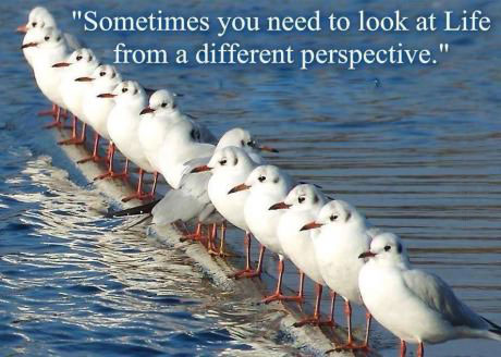 sometimes you need to look at life from a different perspective, seagulls in a row with a single one turned around