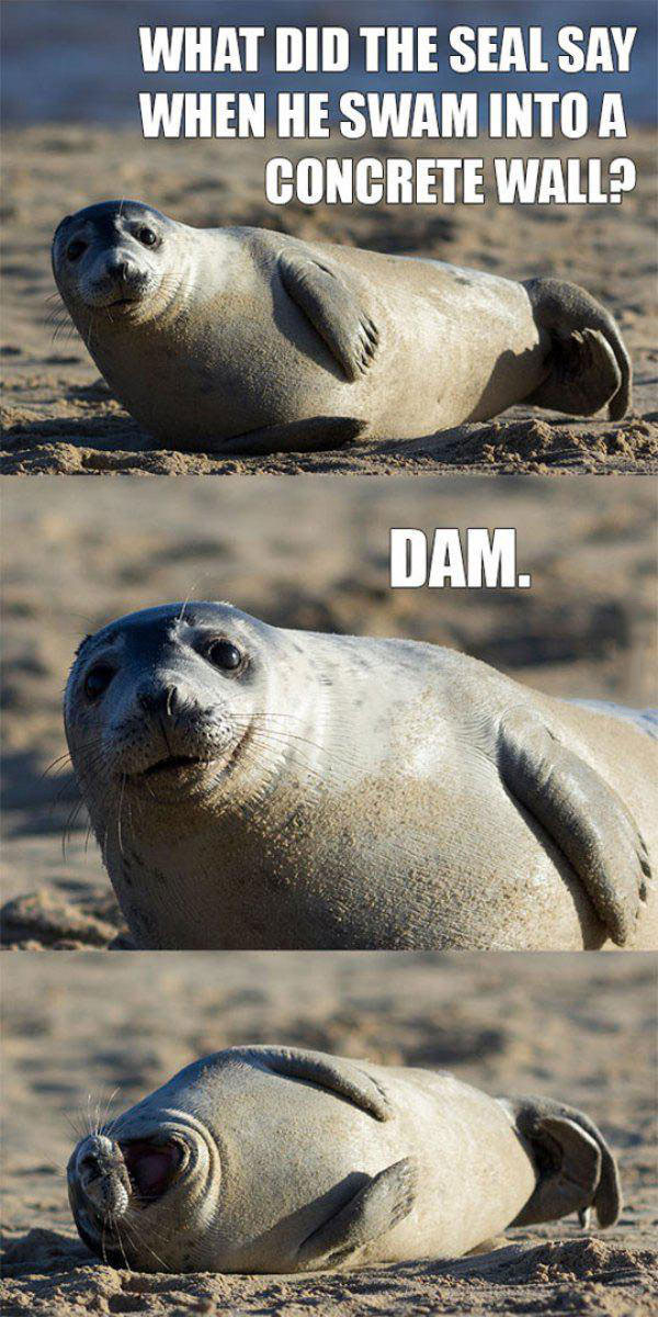 what did the seal say when he swam into a concrete wall?, dam, meme