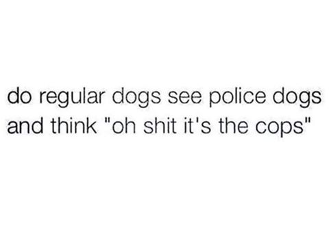 do regular dogs see police dogs and think oh shit it's the cops