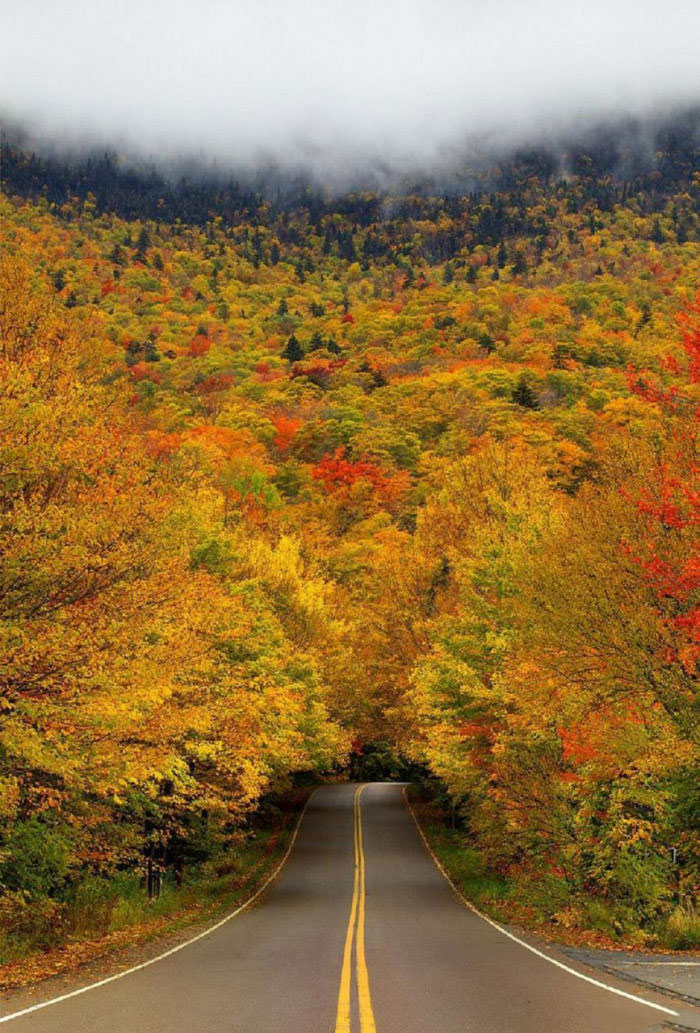 drive into the autumn forest vortex, beautiful scenery