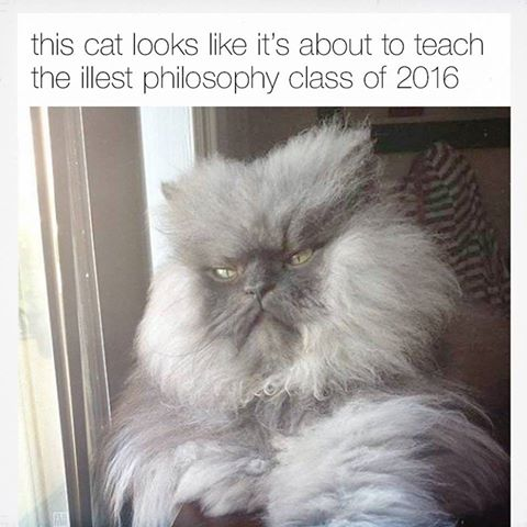 this cat looks like it's about to teach the ills philosophy class of 2016