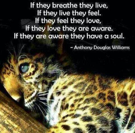 if they breathe they live, if they live they feel, if they feel they love, if they love they are aware, if they are aware they have a soul, anthony douglas williams