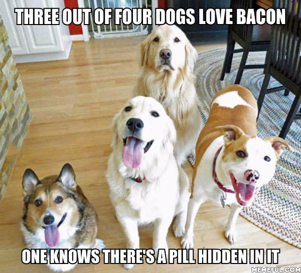 three out of four dogs love bacon, one knows there's a pill hidden in it, meme
