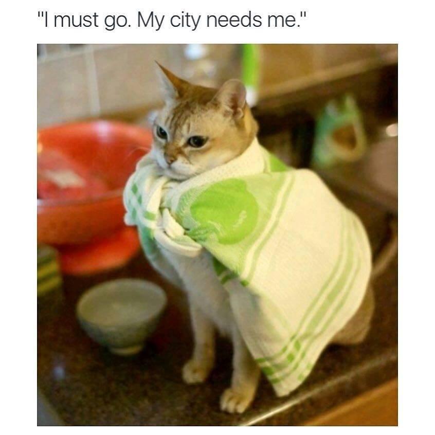 i must go my city needs me, superhero cat