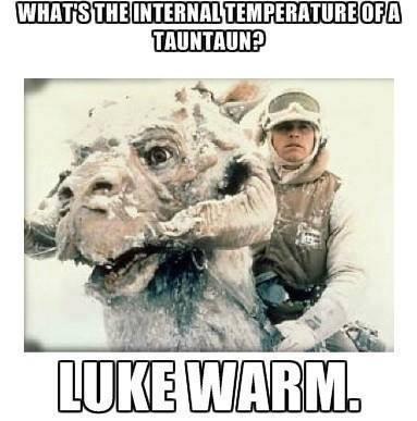 what's the internal temperature of a tauntaun?, luke warm, star wars